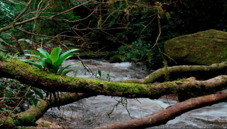 Bioma Mata Atlântica